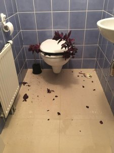 Foto: Klomuschel, die eine Pflanze gefressen hat.