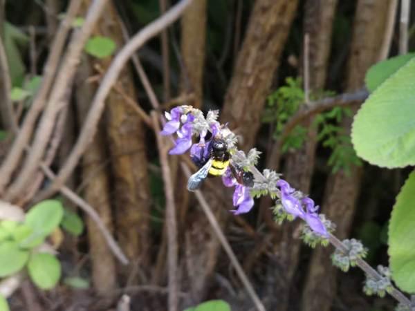 Foto: Biene auf einer Blume zu sehen (Fotocredit: Kopfstimme)