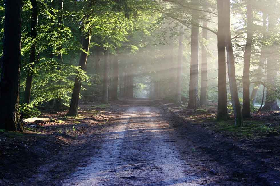 Foto: mit Sonnenlicht durchflutender Waldweg.