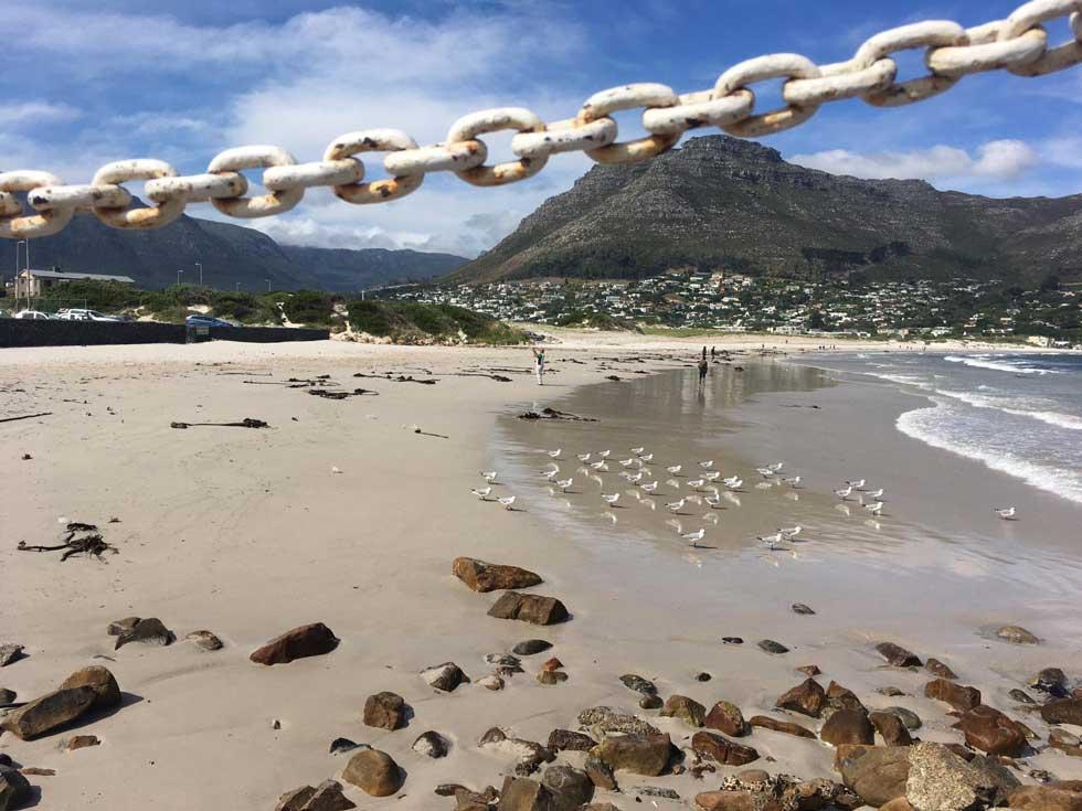 Foto: von Kapstadts Boulders Beach