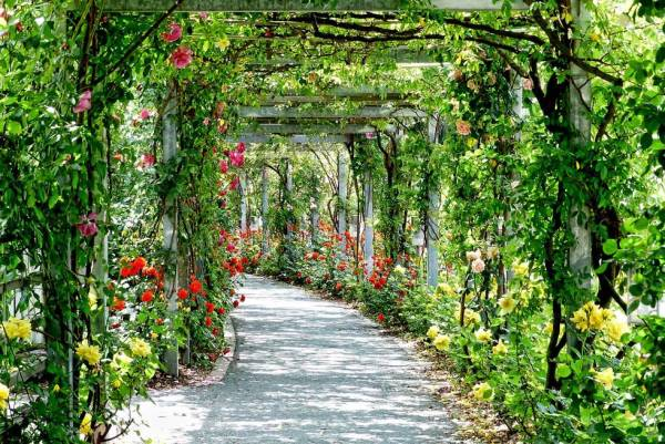 Foto: Ein mit Blumen geschmückter Weg/Torbogen